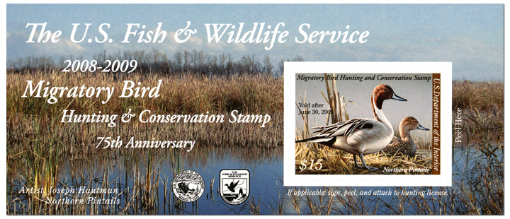 The U.S. Fish & Wildlife Service 2008-2009 Migratory Bird Hunting & Conservation Stamp 75th Anniversary- $15 Northern Pintails self-adhesive by Joseph Hautman, 2008