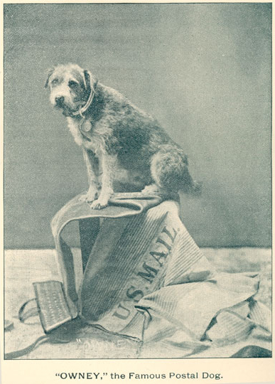 photo of Owney sitting on top of mailbags