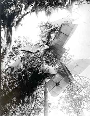 A crashed airplane in a tree