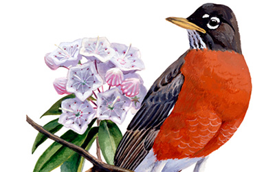 illustration of a Robin and Mountain Laural