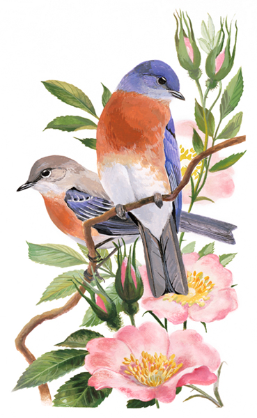 painting of an Eastern Bluebird and a Rose