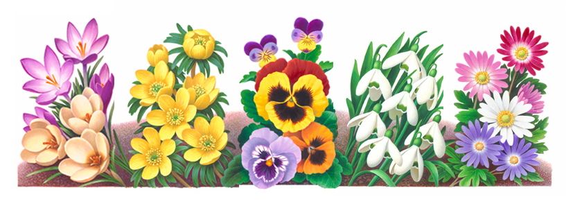 painting of a variety of garden flowers
