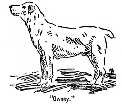 A drawing of Owney the dog standing