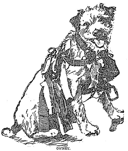 A drawing of Owney the dog posing for a portrait