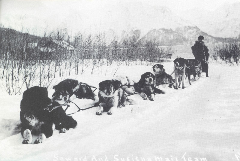 Photo of an Alaskan dog sled with dogs in snow