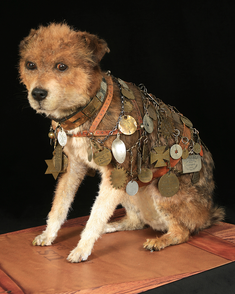 stuffed Owney with his collar and tags