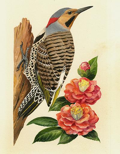 Pájaro carpintero y Camelia. Diseño para la serie de sellos Pájaros y flores del estado, correspondiente a Alabama (1982).