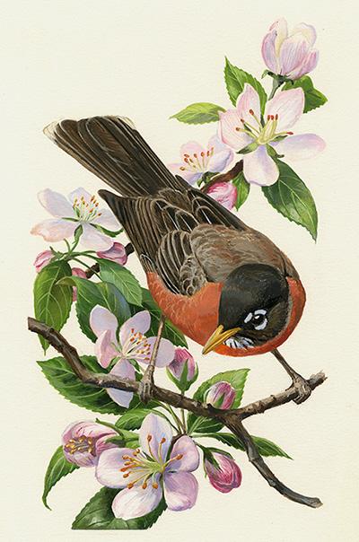La Primavera, en los sellos de Estados Unidos: Aves de jardín