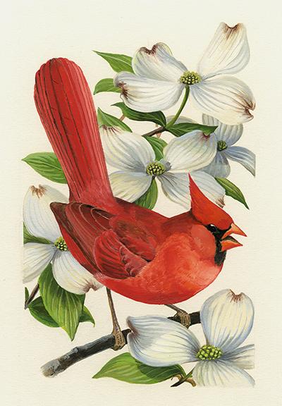 Cardenal norteño y Flor del cerezo. Diseño para la serie de sellos Pájaros y flores del estado, correspondiente a Nuevo México (1982).