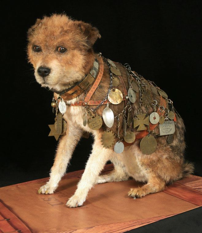 A taxidermy dog wearing a harness covered in medals.